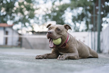 Dog Playing With Ball Outdoors