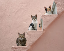 Three Cats On A Pink Stairway,...