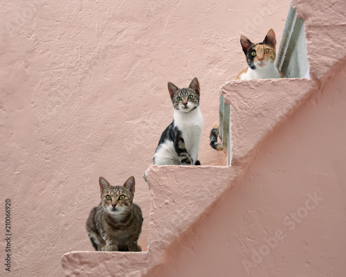 Keuken foto achterwand Kat Three cats on a pink stairway, Chios, Greece, Europe