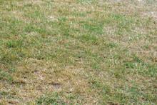 Vertrockneter Rasen Durch Lang Anhaltende Dürre