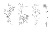 Set Of Vector Hand Drawn Flora...