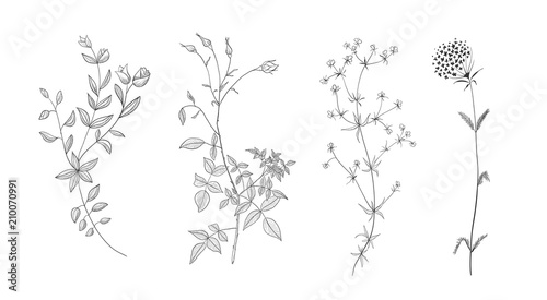 Fototapeta Set of vector hand drawn floral elements. Decoration elements for design invitation, wedding cards, valentines day, greeting cards. obraz