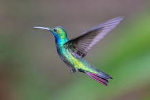 Hummingbird(Trochilidae)Flying...