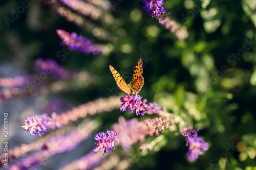 Obraz motyl - fototapety do salonu