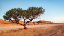 Lonely Tree In The Namib Deser...