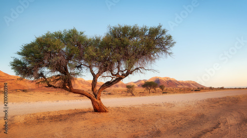 Lonely Tree in the Namib Desert taken in January 2018 Canvas Print