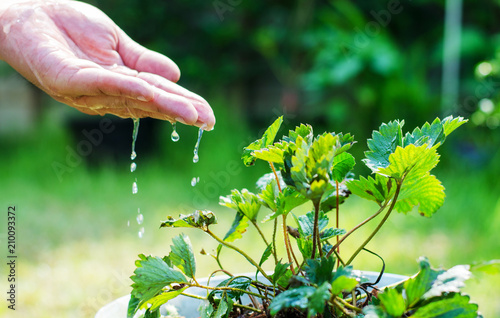 Spoed Foto op Canvas Natuur Hands of farmer growing and nurturing tree growing on fertile soil with green and yellow bokeh background / nurturing baby plant / protect nature