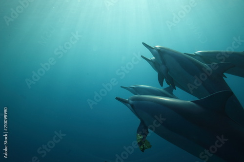 Photo  Pod of dolphins basked in sun rays
