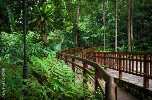 Stampa su Tela Bukit Timah Handrail and Hiking Path Through Singapore Jungle