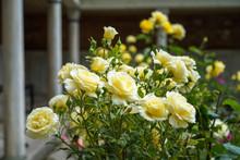 Blooming And Budding Beautiful...