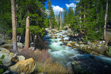 Smooth Flowing Tuolomne River And Mountain Forest - Yosemite National Park