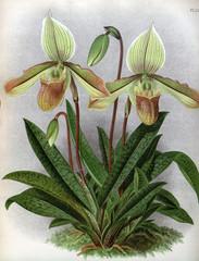 FototapetaIllustration of plant