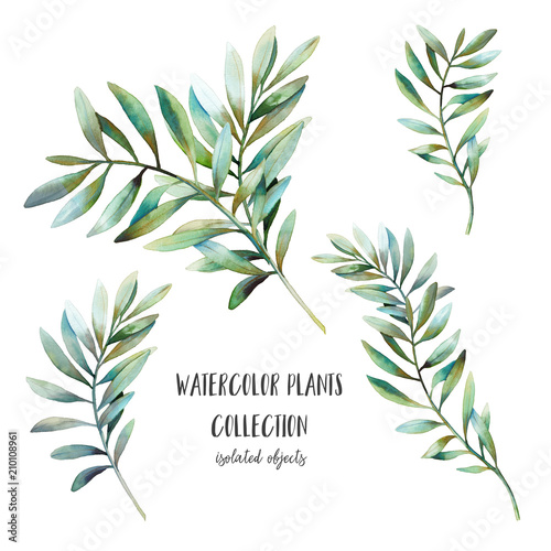 Fotografia  Watercolor plants with long leaves set