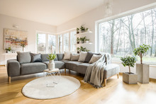 Blankets And Cushions On Corner Grey Sofa Standing In White Living Room Interior With Fresh Plants, Big Window And Abstract Painting
