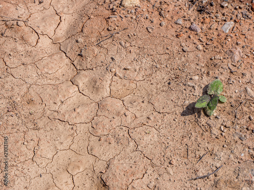 Dürre Trockenheit in Deutschland