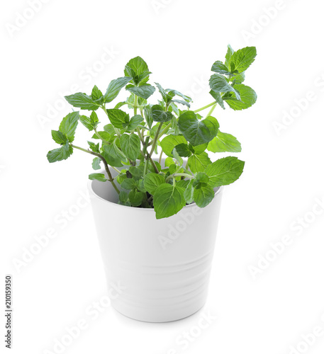 Poster Vegetal Green mint in pot on white background