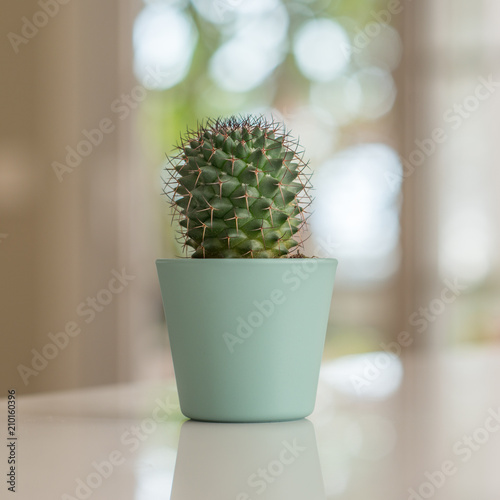 Foto op Aluminium Cactus Decorative cactus on table with sunny bokeh background at home.