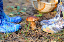 Mushroom And A Small Wicker Basket In The Autumn Forest. On Both Sides Of The Mushroom Are Legs In Blue And Colorful Rubber Boots. The Ground Is Covered With Fallen Leaves. Moscow Region, Russia.