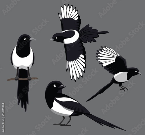 Photo Bird Poses Black-Billed Magpie Vector Illustration