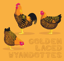 Chicken Golden Laced Wyandottes Cartoon Vector Illustration