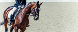 Fototapeta Konie - Dressage horse and rider. Sorrel horse portrait during dressage competition. Advanced dressage test. Copy space for your text.