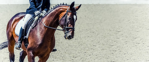 Dressage horse and rider. Sorrel horse portrait during dressage competition. Advanced dressage test. Copy space for your text.