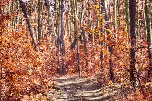 Papiers peints Orange eclat trail in the orange autumn forest