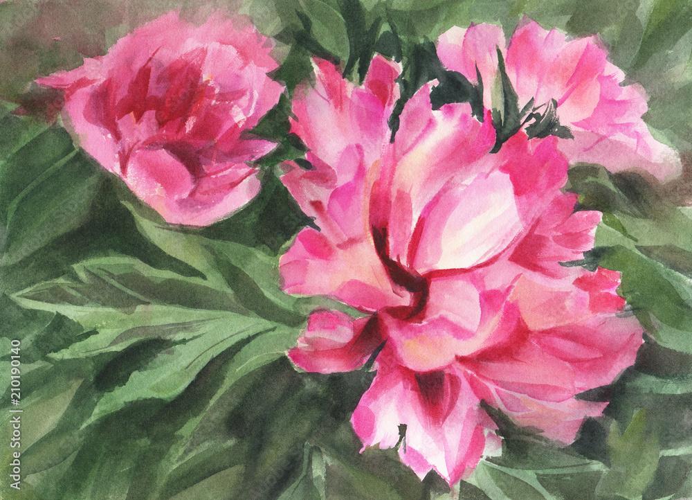Kwiaty w akwarela. Peonie. <span>plik: #210190140 | autor: tiff20</span>