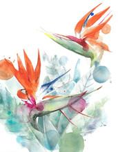 Tropical Flowers Bird Of Parad...