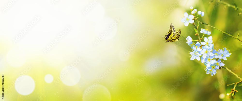 Fototapeta Wunderschöner Schmetterling