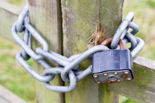 Padlock Locked With A Metal Chain On A Gate
