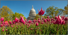 Spring Time At The Capitol
