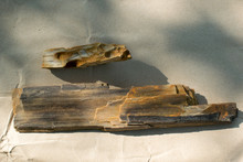 Fragments Of Petrified Wood On...