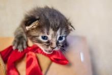Little Kitten In A Gift Packag...