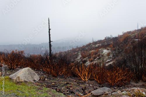 Garden Poster Brown Forest fire aftermath in Yosemite Landscape