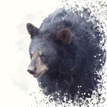 Black Bear Portrait Watercolor...