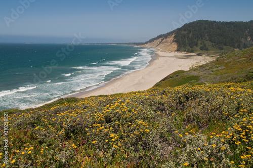 Pacific coast Poster