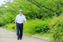 緑の中を散歩する高齢...