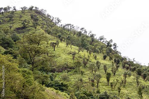 Deurstickers Pistache Natural Landscape, Burma
