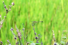 Dragonfly Beautiful On Fresh Background Abstract Green