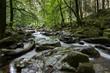 Waldfluss - Langzeitbelichtung