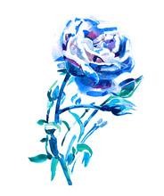 Blue Rose - Watercolor Hand Painting Artwork