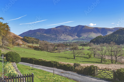 Foto op Canvas Pistache Countryside landscape at a sheep farm in Lake District of England, United Kingdom