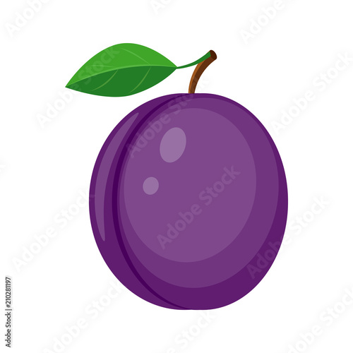 Colorful juicy plum with green leaf vector illustration isolated Canvas Print