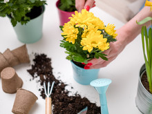 Person Transplanting Flowers O...
