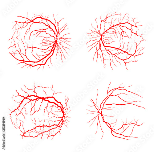 Cuadros en Lienzo  eye vein set system x ray angiography vector design isolated on white
