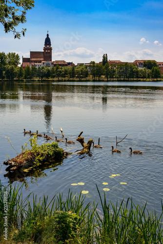 Fotografie, Obraz  Gänsefamilie auf dem Tiefwarensee, im Hintergrund die Silhouette von Waren mit der Kirche St