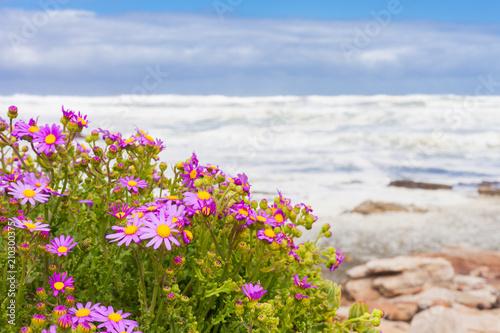 Small Pink Coastal Flowers On The Atlantic Sea S