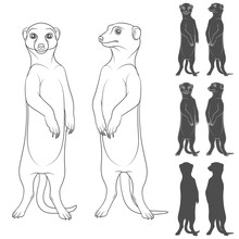 Set Of Black And White Illustrations Depicting The Meerkats. Isolated Vector Objects On White Background.