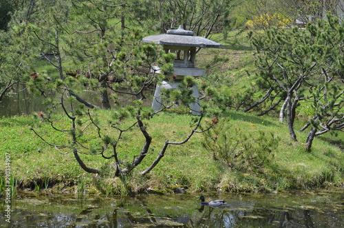 Foto op Canvas Pistache japan garden landscape stone